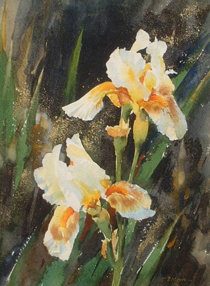 image showing White Irises: Watercolour